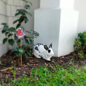 Scamp in the garden